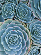 Succulents by Ravese